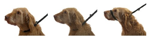 Dogs Amp Co Figure Of 8 Dog Lead For Dogs That Pull 3 Leads