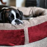 Luxury-Fleece-Dog-Bed-Size-Large-0