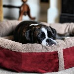 Luxury-Fleece-Dog-Bed-Size-Large-1