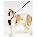 Non-Pull-Dog-Harness-Stop-Your-Dog-Pulling-Large-0