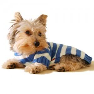 Size #12, Designer Pet Clothes, Blue Stripe Dog Hoodie Jumper