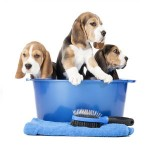 Dog Grooming dog accessories