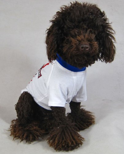 England Dog Football T Shirt 6 Sizes Xxl