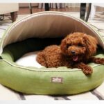 Luxury-High-End-Pet-bed-with-removable-top-pet-nest-dog-kennel-steel-bed-sofa-bed-cat-tactic-small-dog-pet-products-Lime-green-0
