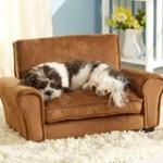 Dog Sofa dog outfit
