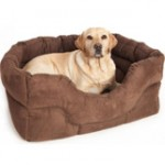 Dog Beds dog outfit