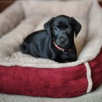 Luxury-Fleece-Cradle-Dog-Bed-Size-Large-0-2