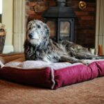 Luxury Fleece Cradle Dog Bed Size XXLARGE