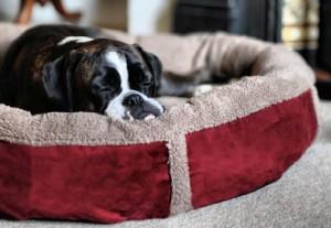 Luxury Fleece Dog Bed Size Large