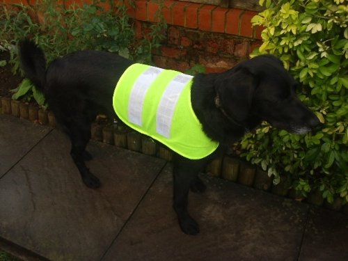 Large Pet Dog Hi Viz Flourescent Safety Vest Coat Jacket