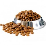 Dog Food dog accessories